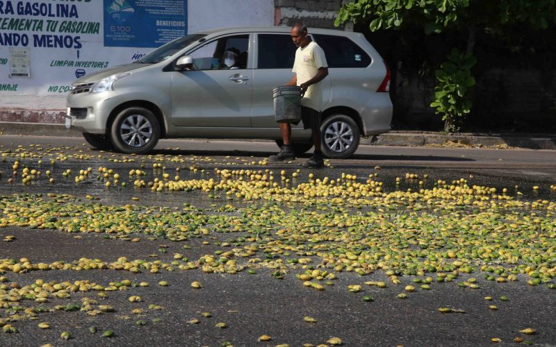 24 de septiembre del 2020 Acapulco, Guerrero.  Un hombre aprovecha para recoger algunos limones que fueron tirados al boulevard Lázaro Cárdenas por productores de limón de Acapulco, en protesta para exigir la  reapertura de la planta procesadora de Agroindustrias del Sur. Foto: Carlos Alberto Carbajal