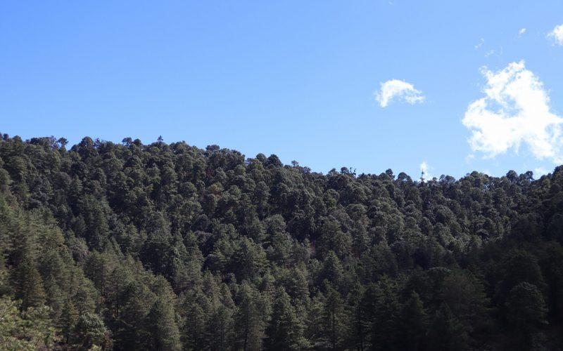 La Cienega gro, 21 de enero 2021. // Parte del predio de 400 hectáreas de bosque del ejido La Cienega, perteneciente al municipio de Chilpancingo, el cual ejidatarios denunciaron que la Secretaría del Medio Ambiente y Recursos Naturales (Semarnat) y la Procuraduría Federal de Protección al Ambiente (Profepa) autorizaron un permiso para su explotación. // Foto: Jesús Eduardo Guerrero